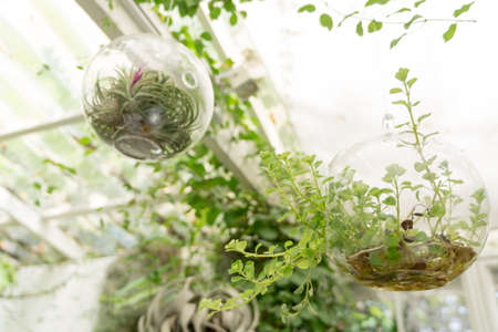 Hanging trees in the bottle under the glasshouse roof