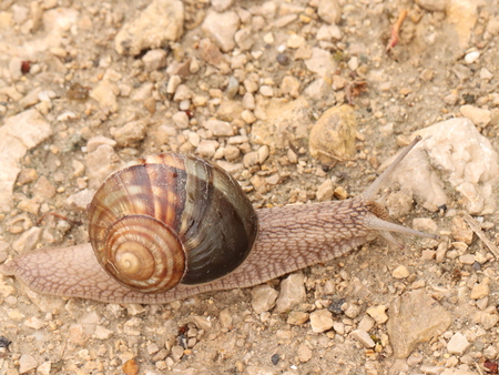 snail turns home