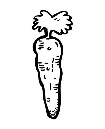 carrot doodle Vector