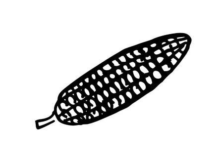 corn doodle Vector