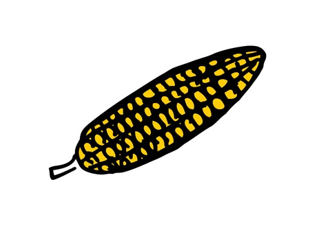 corn in doodle style Vector
