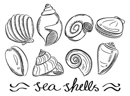 almeja: conjunto de conchas de mar del doodle