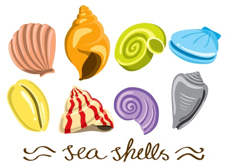 conjunto de conchas de mar colorido Ilustración de vector