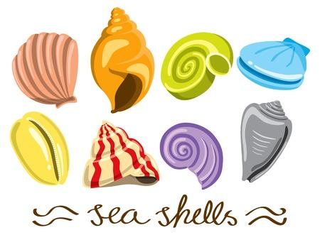 sor színes tengeri kagyló Illusztráció