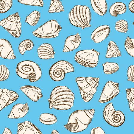 scallop: sea shells background