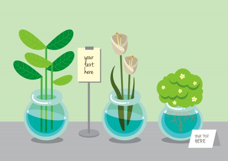 plant pot: Water plant in a pot