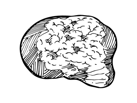 sketchy brain Vector
