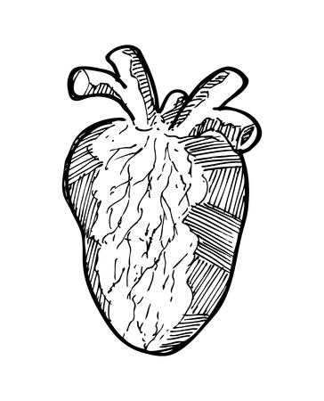 body heart: sketchy human heart Illustration