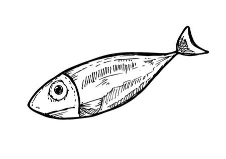 skizzenhaften rohem Fisch