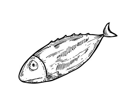 fish clipart: sketchy raw fish Illustration
