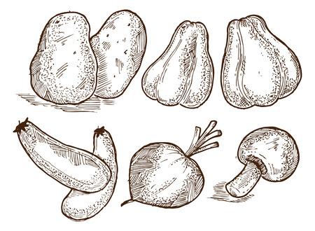 rindfleisch roh: skizzen rohes Gem�se