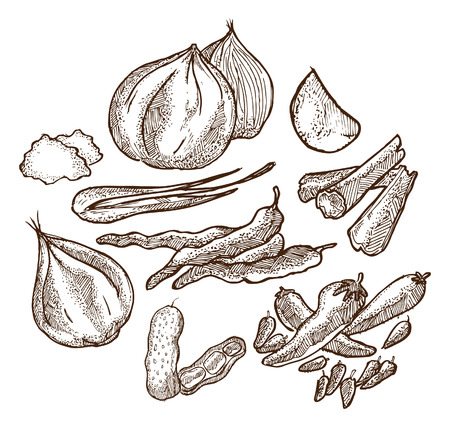 set of herbs and spices doodle Vector