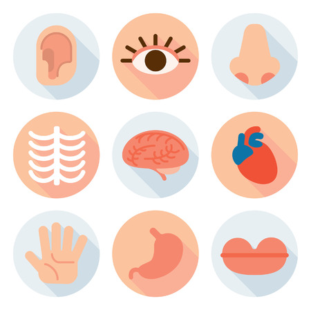 Body part flat icon Illustration