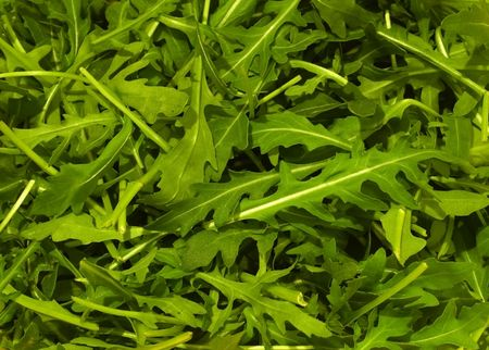 roquette: Natural background of rucola salad.