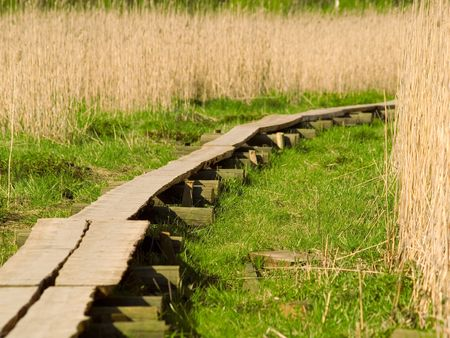 bullrush: A path in the bulrush leading to the unknown