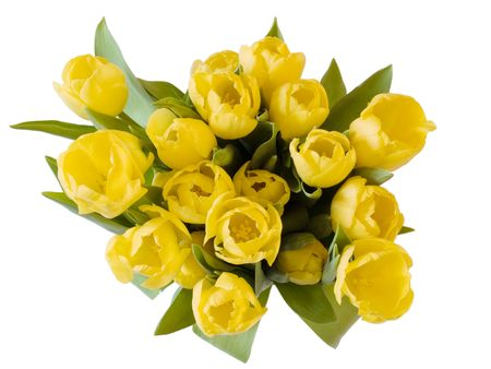 A bunch of yellow tulips on white Stock Photo