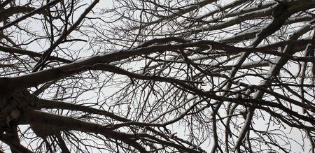 branches in winter, without leaves in the snow Stockfoto