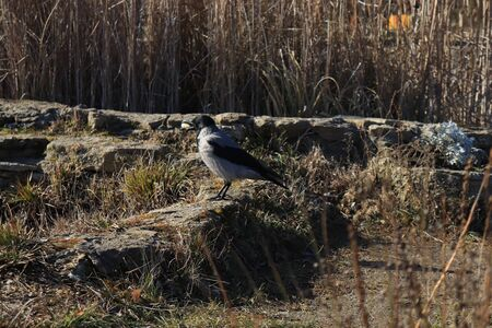 magpie in the sun in the park resting Imagens