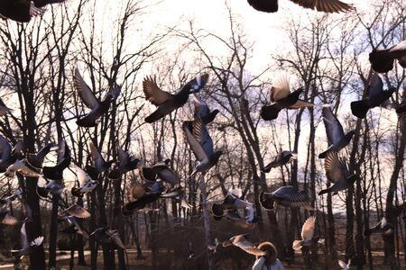collection of magpies in a park in the sun, Flight of bird Imagens