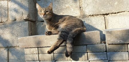 portrait of a striped domestic cat posing on a sunny day outdoors