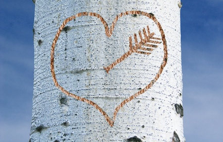 Birch tree valentine carving with arrow #1 Stock fotó
