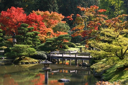 autumn colour: Arboretum,Seattle Japanese Garden at Washington Park