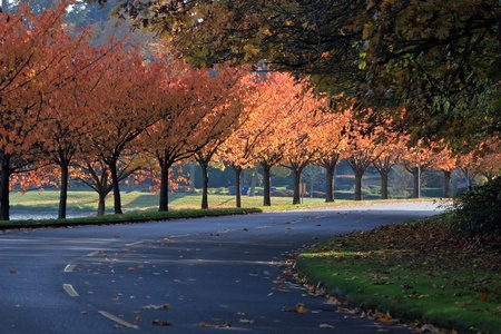 Lake Washington Blvd autumn season view of the blvd.,with a row of Japanese maple trees along left side of roadway. Stock Photo
