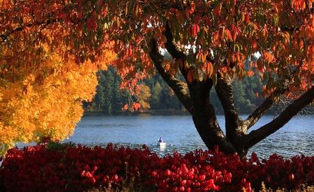 blvd: Lake Washington Blvd autumn season Stock Photo
