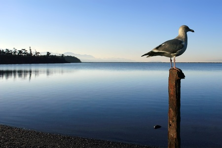 Seagull perched atop rusted metal post in foreground.