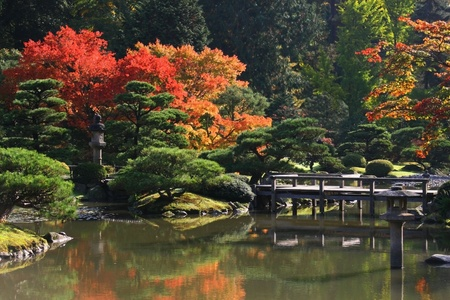 arboretum: View of reflecting pond in the foreground with a foot bridge center right.Japanese Garden,Washington Park Arboretum,Seattle.  Stock Photo