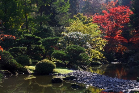 arboretum: View of reflecting pond in the foreground along with Japanese maples in the background. Gravel bar showing along lower right side of photo. Japanese Garden,Washington Park Arboretum,Seattle.  Stock Photo