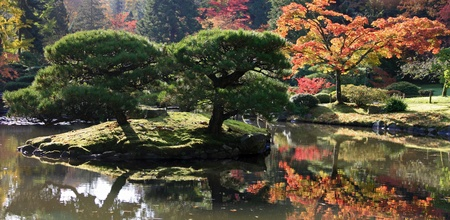 Panoramic view with a small island containing two trees and various japanese maples in the background.Japanese Garden,Washington Park Arboretum,Seattle.  photo