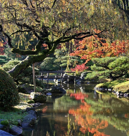 garden center: View of reflecting pond in the foreground with a foot bridge center left along with Japanese maples in the background reflected in the water below.Japanese Garden,Washington Park Arboretum,Seattle.  Stock Photo