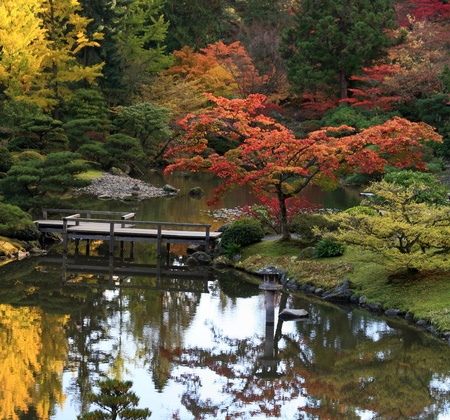 japanese maple: View of reflecting  pond in the foreground, footbridge center and background of Japanese Maples in autumn colors. Japanese Garden,Washington Park Arboretum,Seattle.  Stock Photo