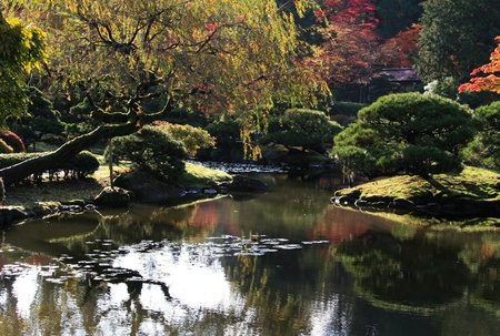arboretum: View of reflecting pond in the foreground with various japanese maples in the background.Japanese Garden,Washington Park Arboretum,Seattle.