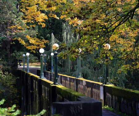 japanese maple: Concrete foot bridge covered in moss at the Washington Park Arboretum,Seattle.  Stock Photo