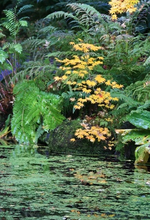upper half: Foreground of pond,with upper half of various colored plants and green ferns.Taken at the Japanese Garden,Washington Park Arboretum,Seattle. Stock Photo