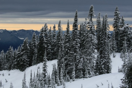 hemlock: Landscape style photo showing snow,snow covered trees,and a very dark gray sky
