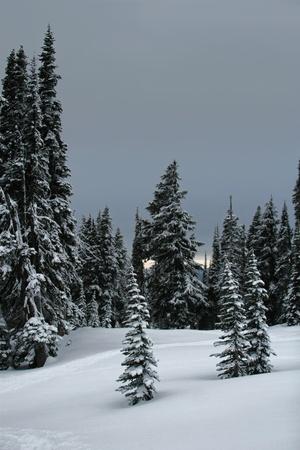 雪、雪に覆われた木および非常に暗い灰色の空を示す肖像画スタイルの写真