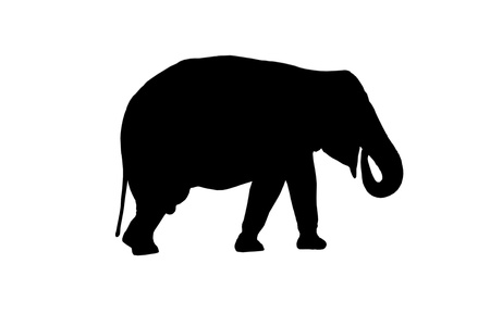 facing right: Silhouetted side view of an elephant facing right,with his trunk up in his mouth and tail down.Isolated. Stock Photo