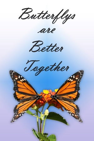 good feeling: Two Monarch butterflys facing each other and alit on a flower  Done in portrait style with purples and blues to give it a good feeling  The words at the top read   Butterflys are better together