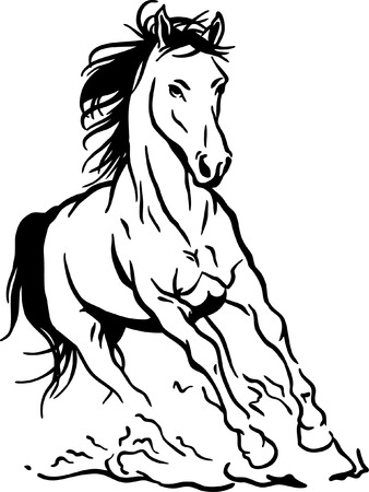 white horse: Running horse Illustration