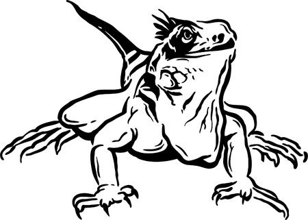aqueous: leguan illustrato Vettoriali