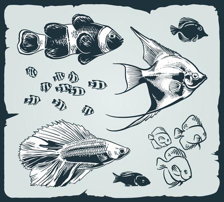 vintage illustration of fishes