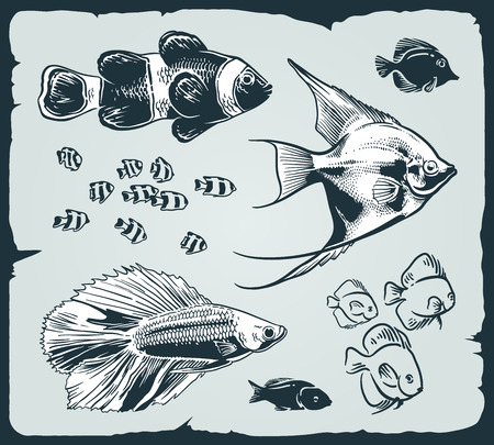 vintage illustration of fishes