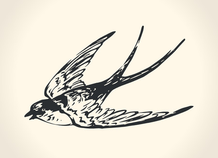 tatouage oiseau: Illustration vintage d'hirondelle Illustration