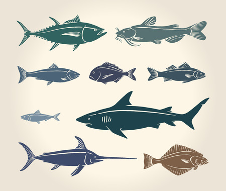 sharks: Vintage illustration of fish