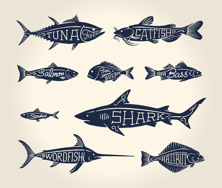food illustration: Vintage illustration of fish with names in tattoo style over white background