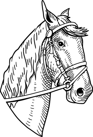 Horse head vintage illustration on white background