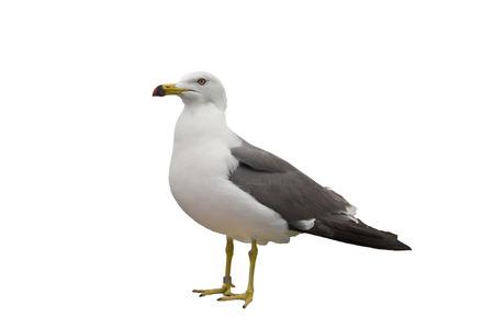 seagull Archivio Fotografico